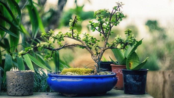Искусство бонсай для начинающих — выбираем растение, полезные советы по уходу и выращиванию