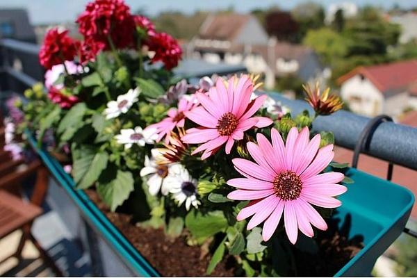 Что посадить на балконе: список моих любимых цветов и других растений