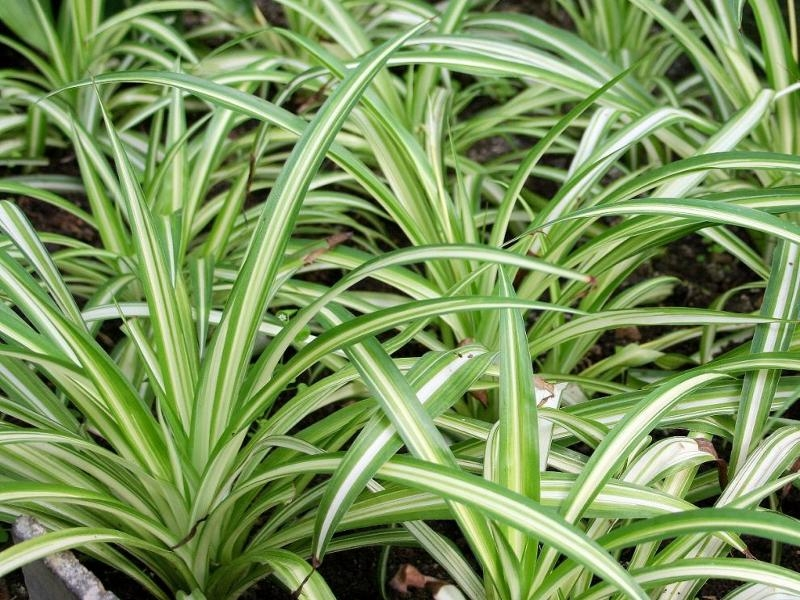 5 лучших растений для спальни