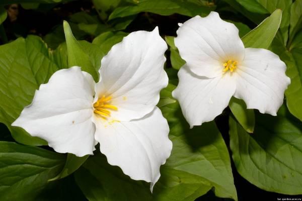 5 лучших растений, которые растут в тени